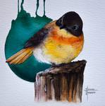 Black-and-orange flycatcher