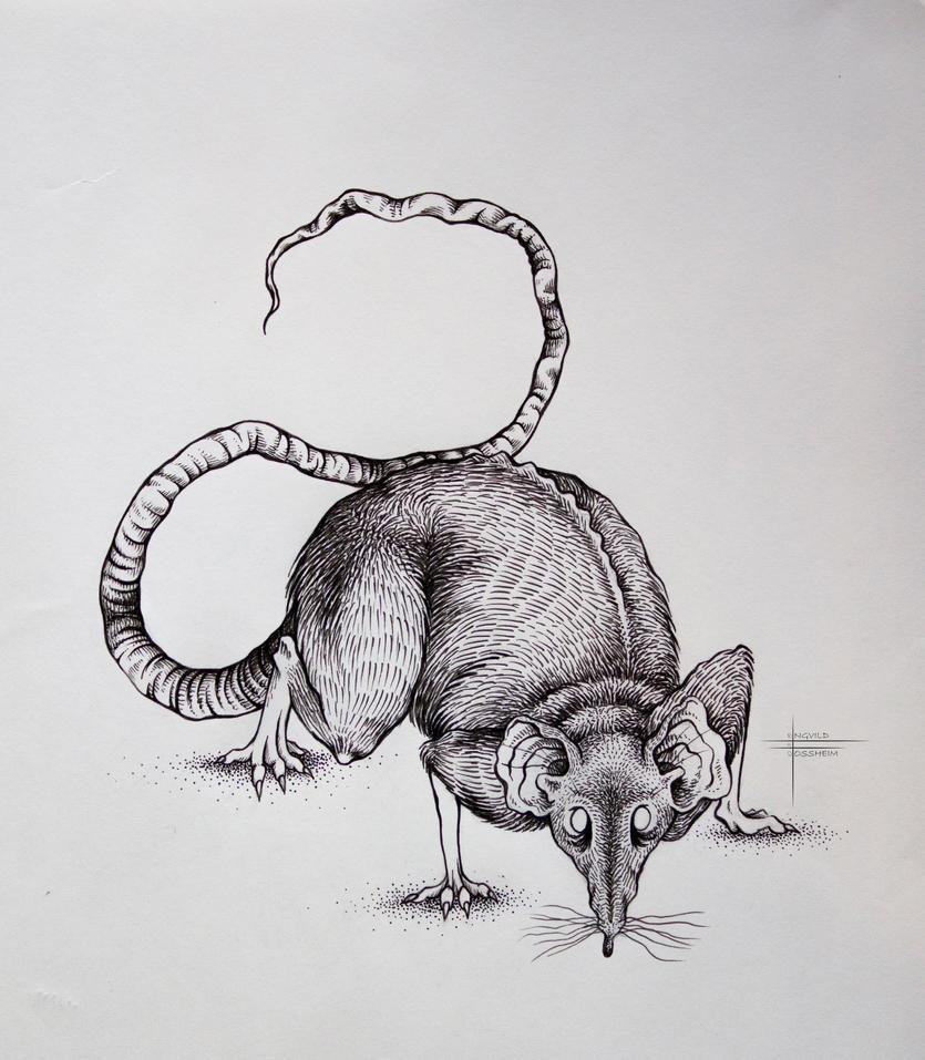 Rat by V354Cephei