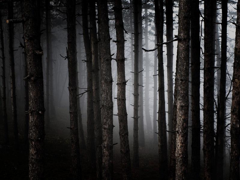 why so spooky by Bamfi