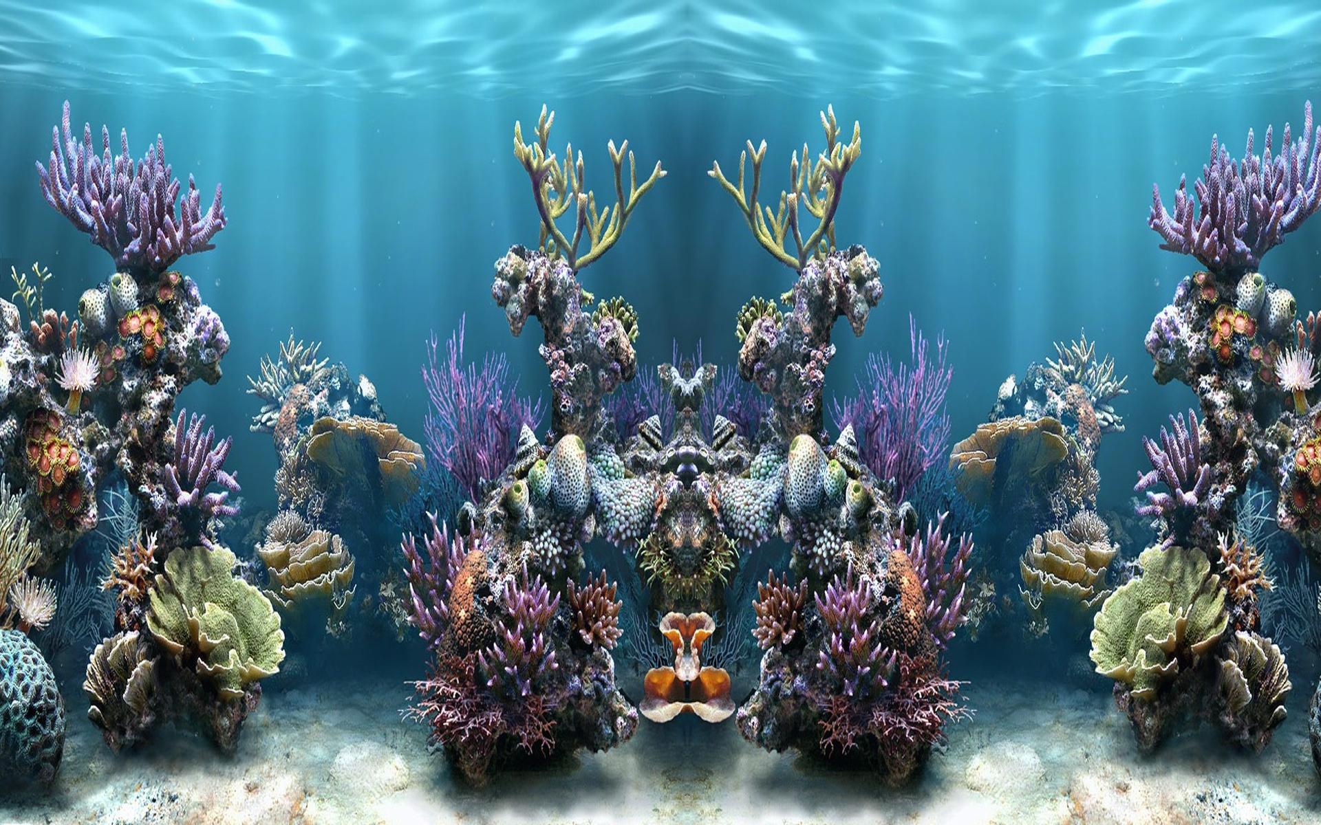 fish ie tank