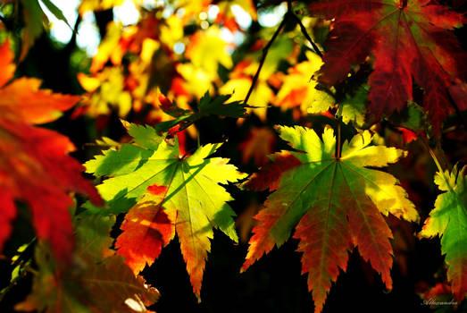 Autumnal emotions