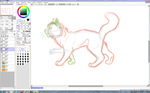 New cat anatomie