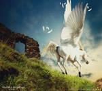 Flying Free