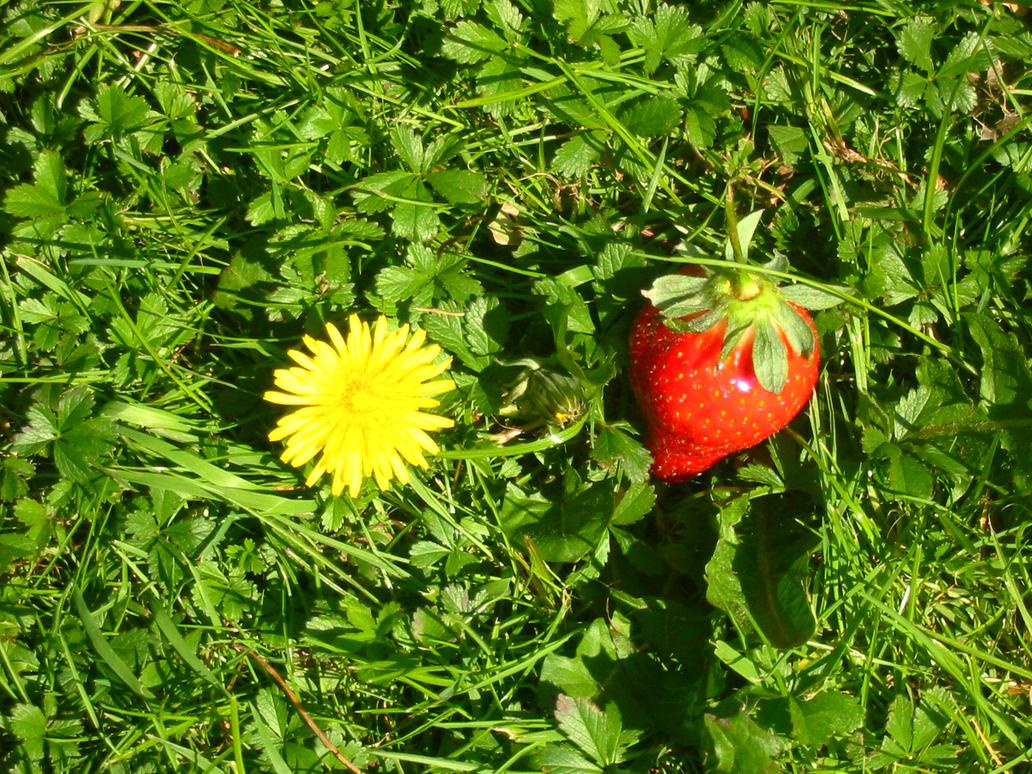stock - strawberries 2 by Ginnyhaha-Stock