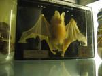 Stock -- Pickled Bat