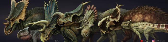 CERATOPSIANS. skull diversity showcase by MarioLanzas
