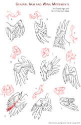 Wing-Movement Sheet 2 by Lizkay
