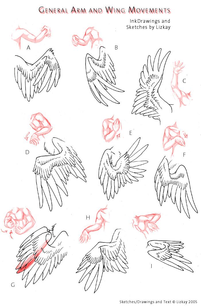 Wing Movement Sheet 2 By Lizkay On Deviantart