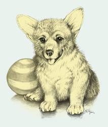 Corgi Puppy by Lizkay