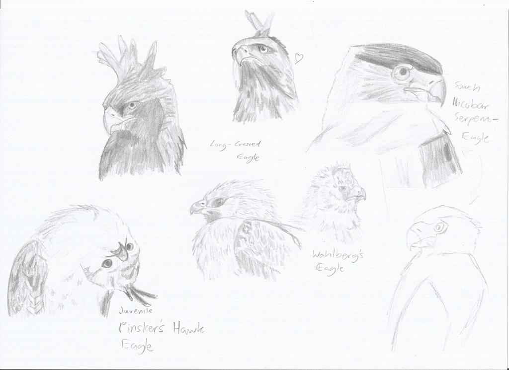 EAGLE SKETCHES by PhanerozoicWild
