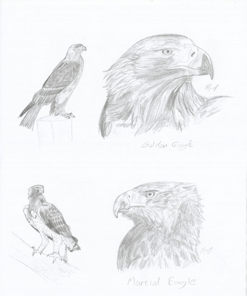 A GOLDEN EAGLE MEETS A MARTIAL EAGLE by PhanerozoicWild