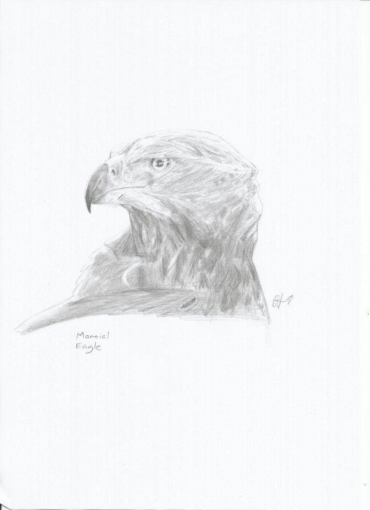 Martial Eagle by PhanerozoicWild