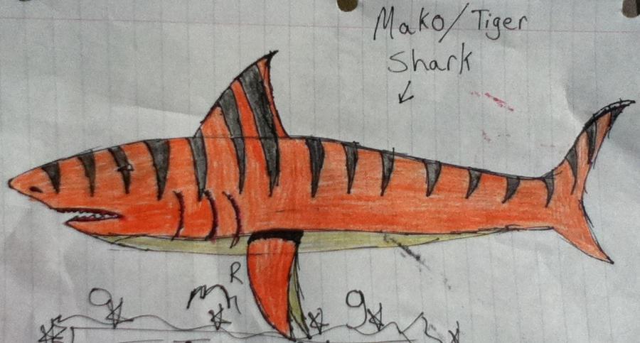Shark hybrid drawing - photo#4