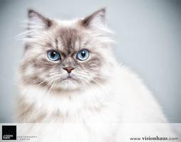 Cat 1 :: Vision Haus