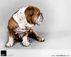 Bulldog 1 :: Vision Haus