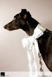 Greyhound 1 :: Vision Haus