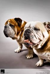 Bulldogs 2 :: Vision Haus