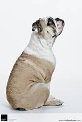 Bulldog Puppy 1 :: Vision Haus