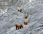 the Four Bears 5338