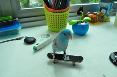 Skating bird by Timocool
