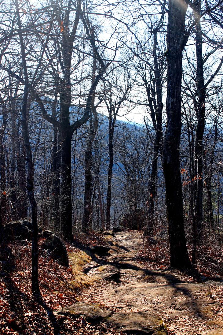 Darkwood Trail by Daemare