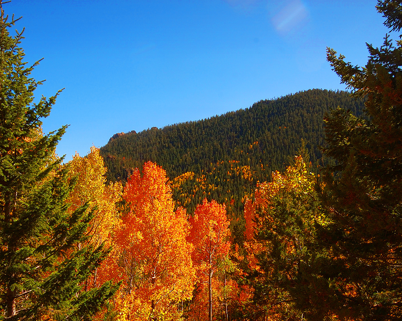 Autumn Layers by greenunderground