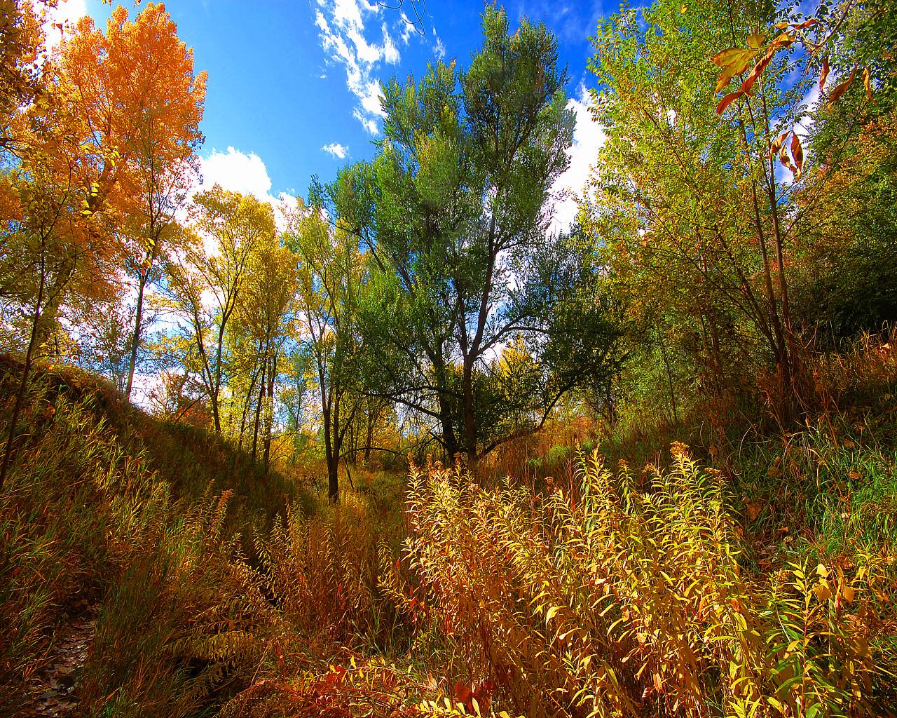 Lush Autumn by greenunderground