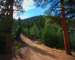 Forest Pillars