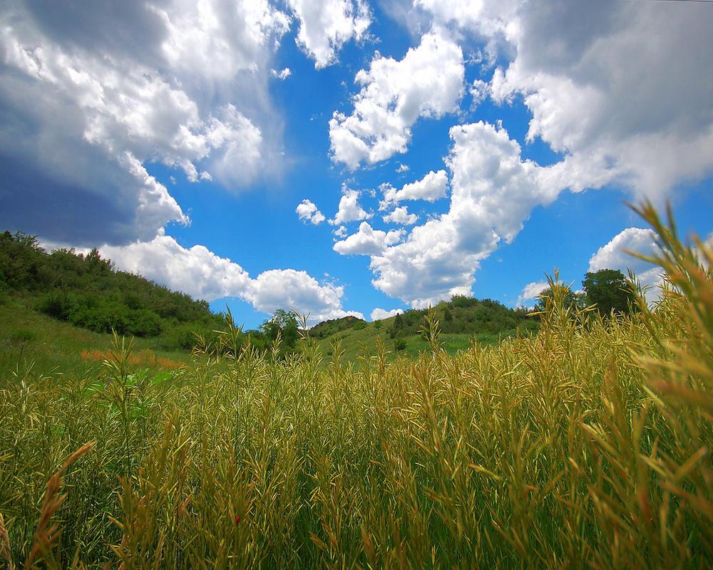 Shag Rug Meadow by greenunderground