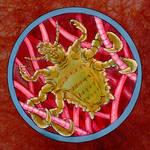 Parasite Portrait Crab louse