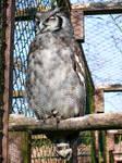 Eule Lidschatten _ owl with eye shadow