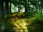 Magical Wood _ Zauberwald