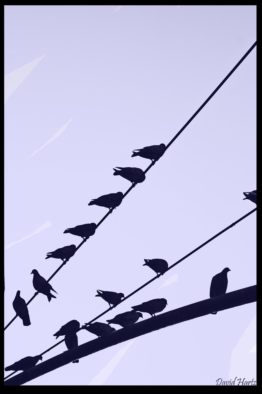Bird silhouette by davidheartzs