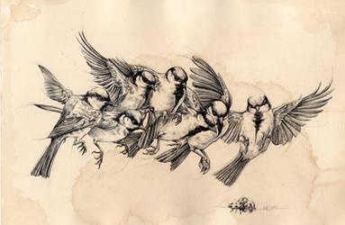 Bird flying study by noiaillustration