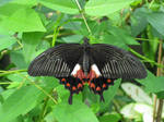 Butterfly stock 4