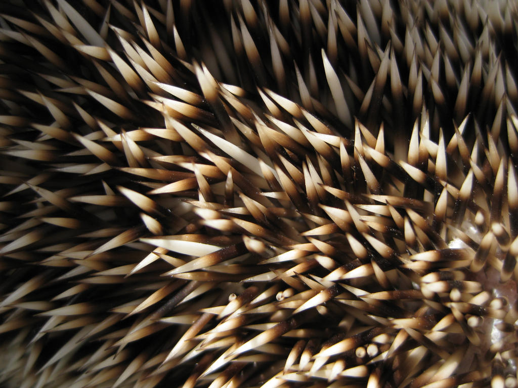 Hedgehog texture 1 - alert by alphasoupstock on DeviantArt