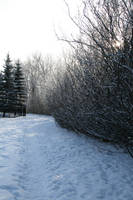 Ravine Path - Winter 1 by Stickfishies-Stock