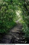 Ravine Path - Summer 2
