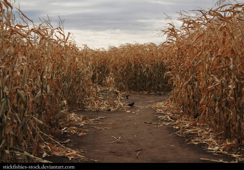 Corn Field 2 by Stickfishies-Stock