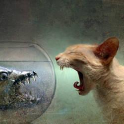 Confrontation by pedroluispalencia