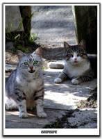 cats by deardark