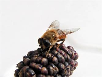 bee by deardark