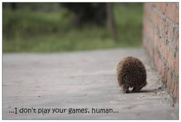 hedgehog by janineFA