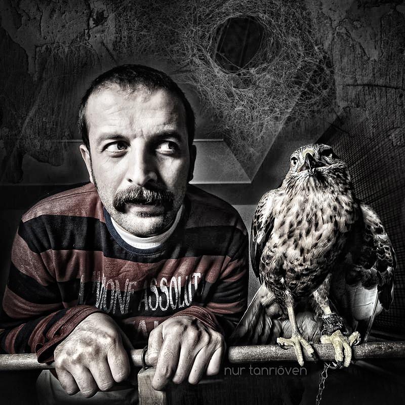 hawk - by nurtanrioven