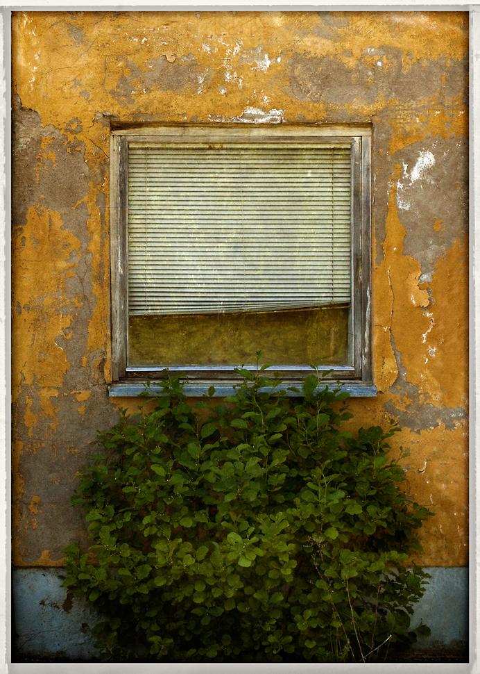 Bush by Poromaa