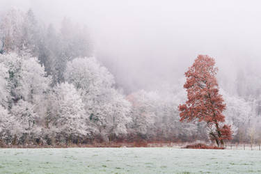 Frosty landscape by JohnyG
