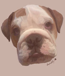 Frank the British Bulldog by Dragonite1