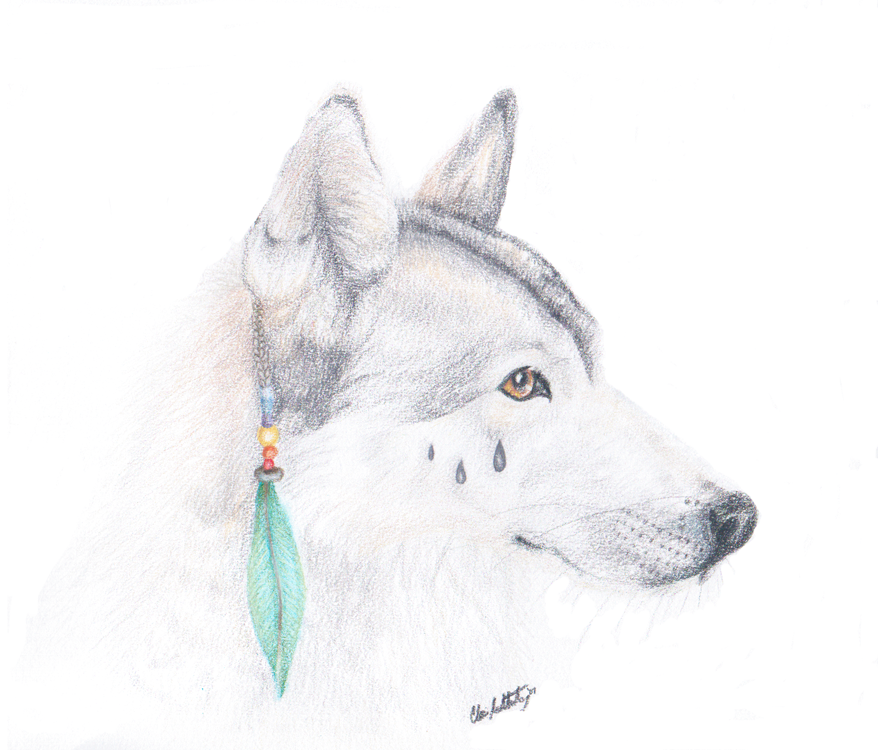 Native Wolf Sketch by Dragonite1 on DeviantArt