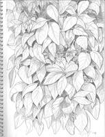 Leaves by Orangeandbluecream
