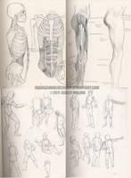 School art: Anatomy and gesture sketches by Orangeandbluecream